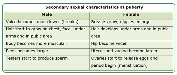 Secondary sexual characteristics boys