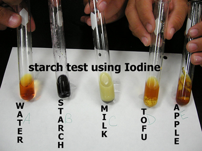 food test for starch glucose protein and fat