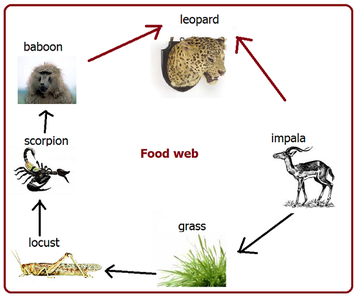 Food Web Biology Notes For Igcse 2014