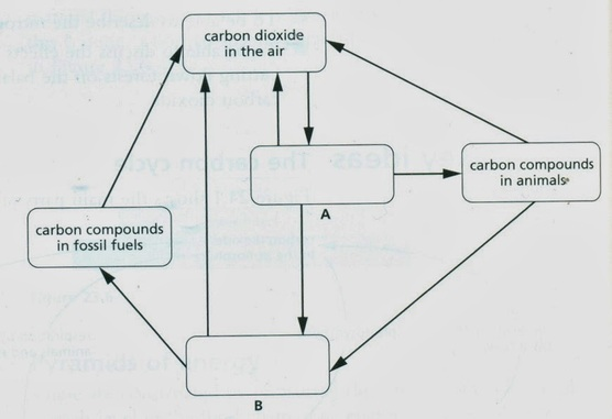 Carbon water cycles biology notes for igcse 2014 a copy and complete the cycle by filling in boxes a and b 2 marks b on your diagram label with the letter indicated an arrow that represents the ccuart