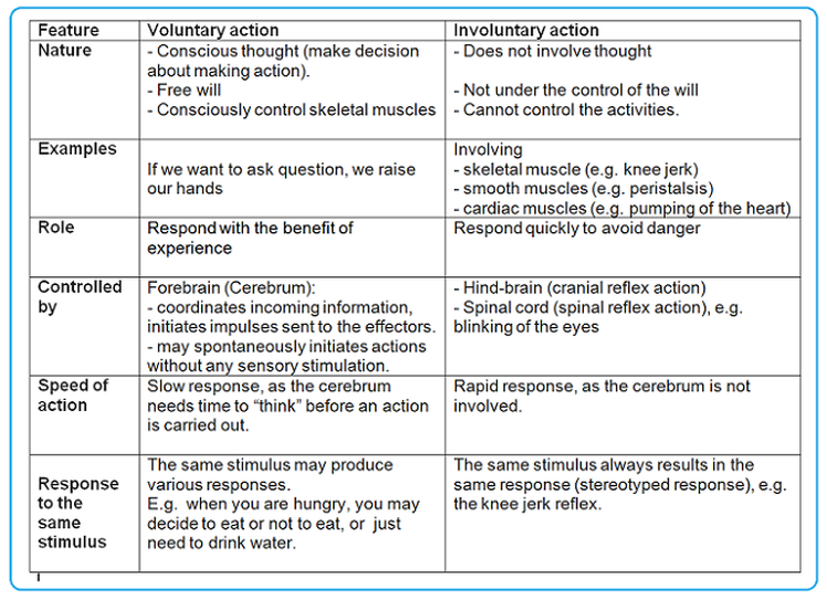 Voluntary, involuntary actions - Biology Notes for IGCSE 2014