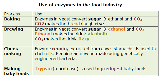 the specificity of brewers and bakers yeast enzymes to different sugars