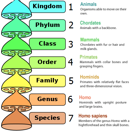 Classification of Living organisms - Biology Notes for ...