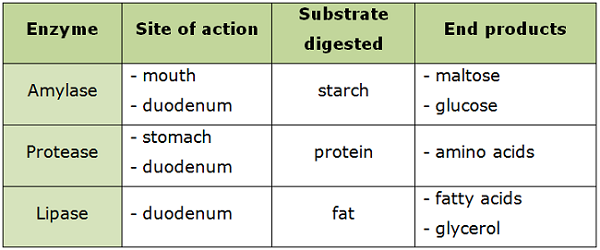 mechanical and chemical digestion - biology notes for igcse 2014, Cephalic Vein