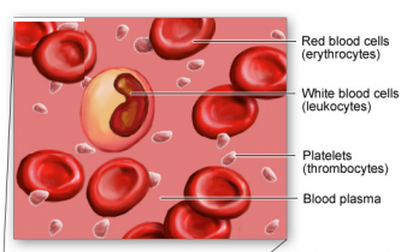 Blood cells - structure and functions - Biology Notes for ... White Blood Cells Diagram Labelled