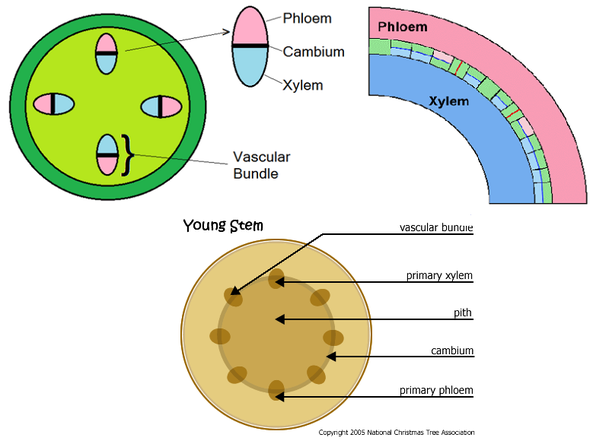 Functions - Biology Notes for IGCSE 2014